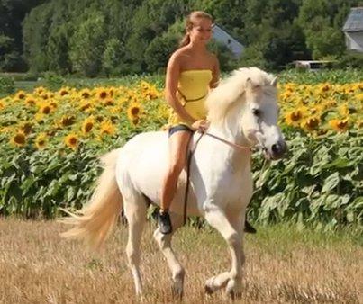 Reiterferien im Westerwald