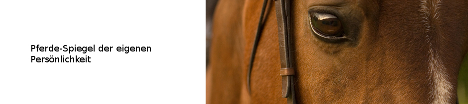 reitkurs arbeit mit pferden